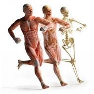 آناتومی و فیزیولوژی انسان